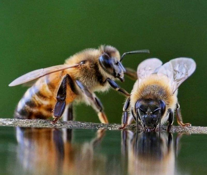 Albinele pot rezolva probleme de matematică